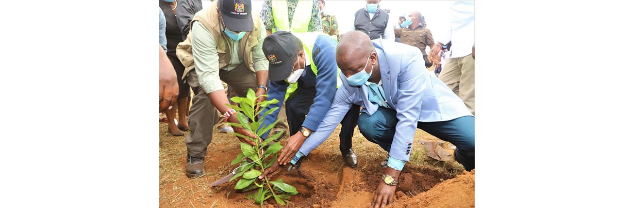 Tree_Planting_Embu2