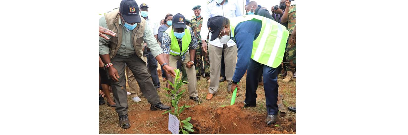 Tree_Planting_Embu3