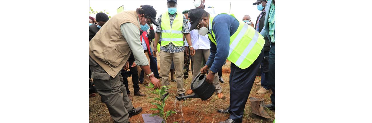 Tree_Planting_Embu4