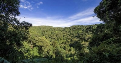 Elephant Maternity: Nyakweri Forest, a unique sub-ecosystem.